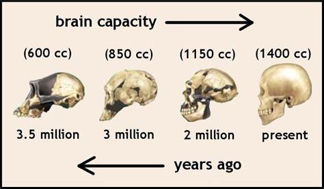 Brain SIZE2
